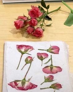 Picked at their peak and then preserved, pressed flowers offer a wonderful way to savor the beauty of summer long after its blooms have faded from the garden.