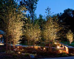 Landscape Lighting Design Lighted River Birch- I love the up lighting ! Outdoor Landscaping, Front Yard Landscaping, Outdoor Gardens, Landscaping Ideas, Side Garden, Lawn And Garden, Garden Paths, Evergreen Landscape, Landscape Curbing