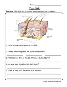 Integumentary System Worksheet Ms. Frizzle teaches