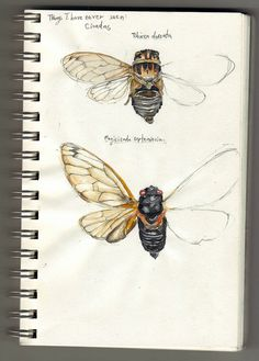 I'm not sure what medium this artist used to draw these insects, but they look amazing! If I could try and paint something like this in my sketchbook, I'd be very happy!
