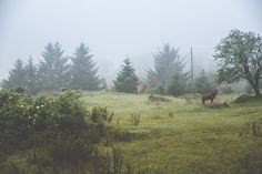 www.heddahestholm.wordpress.com Instagram: @heddussen #adventure #photography #summer #july #canon #lightroom #photoshop #norway #nature #horses #misty #foggy #fall
