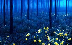 Andy Linden, #5 Black forest during night in Baden-Wurttemberg region, southwestern Germany.  (12 of the Most Enchanting Forests i the World)