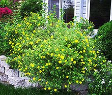 Afficher l'image d'origine Images, Flowers, Plants, Florals, Planters, Flower, Blossoms, Plant, Planting