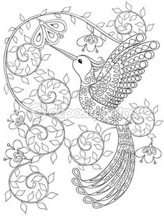 Coloring Page With Hummingbird Zentangle Flying Bird For Adult Books Or Tattoos High Details Isolated On White Background