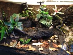 Terrariums, Terrarium For Sale, Reptile Terrarium, Reptile House, Reptile Cage, Vivarium, Les Reptiles, Amphibians, Frog Or Toad