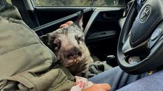 As a bushfire threatened an Adelaide Hills wildlife sanctuary, Brigitte Stevens bundled 15 wombats into three cars and fled, but she held grave fears for the 72 she had to leave behind.