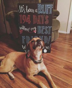 Homecoming sign from the dog