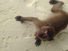 Angry monkey...