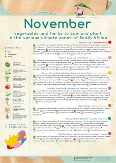 Growing your own organic delicious food is most rewarding! These educational Moonbloom posters will help guide you. South Africa Honeymoon, Carrot And Ginger, Spring Plants, Grow Your Own, Vegetable Garden, Delicious Food, Herbs, Gardening, Posters