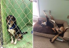 Heartwarming Photos Showing The Difference A Day Makes In The Life Of A Shelter Pet