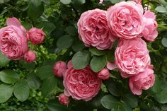 ~Spray of blooms – Leonardo di Vinci~