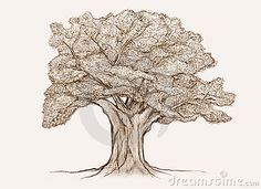 This tree sketch is nearly perfectly formed, if it were bare but it is too perfect, more character at the base and of course no leaves would be better for our purposes Tree Sketches, Guest Book Tree, Moose Art, Lion Sculpture, Statue, Illustration, Artist, Base, Leaves