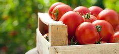 7 Λόγοι για να αγαπάμε τη ντομάτα...