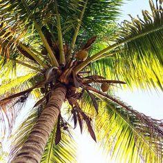 Beautifully Seaside // Formerly CHIC COASTAL LIVING: INSTAGRAM LATELY #palmtree