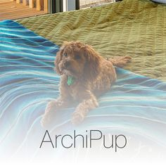 This board highlights the cute puppies present in photos on ArchiPro.co.nz Large Dogs, Cute Puppies, Highlights, Board, Projects, Photos, Photography, Animals, Log Projects
