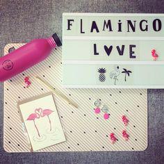 """16 Likes, 2 Comments - Elke Van Schoors (@ernel_geraardsbergen) on Instagram: """"Maak eens een flamingofan happy! #ernel #littlelovelylightbox #24bottles #studioflash #mononcle…"""""""