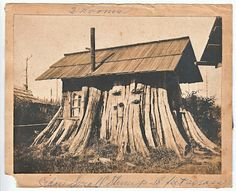 Lumberjack house in a giant cedar tree stump feet across). Old Pictures, Old Photos, Vintage Photos, Giant Tree, Big Tree, Vernacular Architecture, Pavilion Architecture, Sustainable Architecture, Residential Architecture