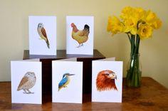 Greeting Cards pack - 'Birds & Birds of Prey'
