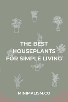 When living simply, it is important to bring some forced routine into your life. One of those routines can be caring for houseplants. These are the best and most common houseplants that are simple to care for. Did we mention that plants can improve your mental health? Pothos Plant, Fern Plant, Trees To Plant, Types Of Houseplants, Types Of Plants, Planting Succulents, Planting Flowers, Benefits Of Indoor Plants, Japanese Minimalism