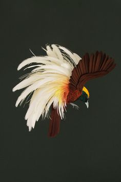 Colombian artist Diana Beltran Herrera specializes in life-like portrayals of birds in paper: single forms, groups in wilderness tableaus, origami aviaries. [via Asylum Art] Origami, Greater Bird Of Paradise, Papercut Art, Book Art, Bird Sculpture, Paper Sculptures, Paper Birds, 3d Paper, Paper Animals