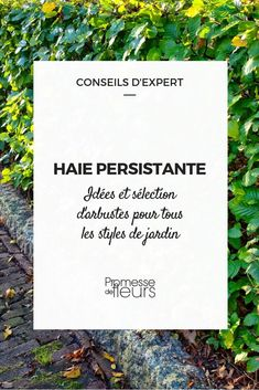 Haie persitante : idées et sélection darbustes, pour tous les styles de jardin Evergreen Hedge, Hidden House, Whisky Tasting, Garden Styles, Permaculture, Hedges, Horticulture, Shrubs, Flower Power