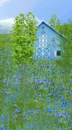 blue barn and blue wildflowers. Country Barns, Country Blue, Old Barns, Country Living, Country Roads, Barns Sheds, Farm Barn, Country Scenes, Rustic Barn