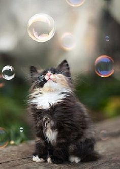 tiny bubbles....  (by ivavestan)