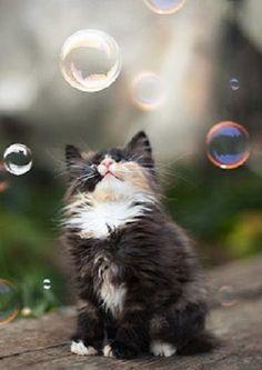 tiny bubbles....  (by ivavestan)