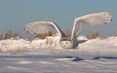 White angel  via @Ou_Prg
