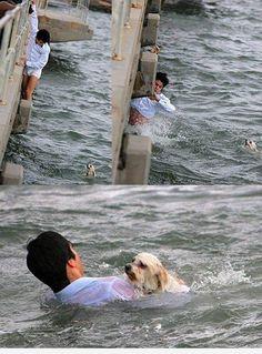 Brave Man Saves Puppy Life!