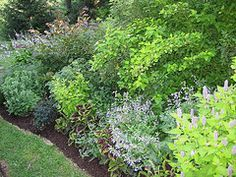 evergreen mixed shrub border garden ideas Pinterest