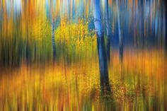 In the Golden Wood. Impressionism by Jenny Rainbow on 500px