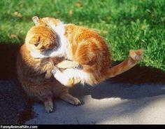 Fighting cat 3