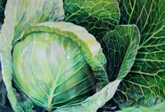 August 17 Original Mixed Media Cabbage Watercolor and Color Pencil -- Toni Grote