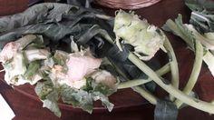 Caule e folhas de brócolis e couve-flor
