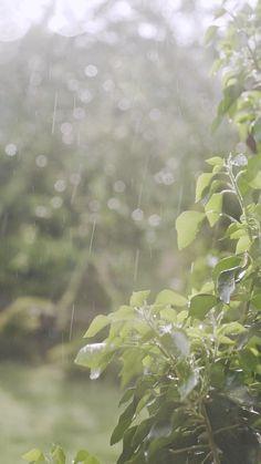 Rain Images Beautiful, Beautiful Photos Of Nature, Amazing Nature, Beautiful Places, Beautiful Beautiful, Rain Photography, Aesthetic Photography Nature, Nature Aesthetic, Headshot Photography
