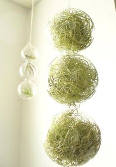 Spring Green 3 Globes Filled With Airplants by SASSY spaces - $29.00 [ Visit Store » ]  Air plants are low maintenance, people. I love how they're whimsically tucked inside these clear glass globes. This is such a conversation piece.