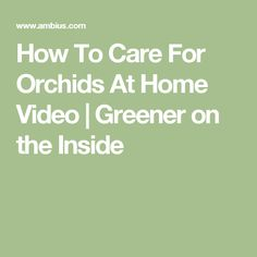 How To Care For Orchids At Home Video | Greener on the Inside