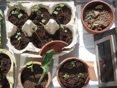 Mein Garten im April + Müllfrei Gärtnern - Oxymora