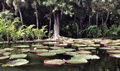 Jardin des pamplemousses-ile Maurice