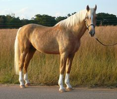 blonde, this looks stunningly a lot like my horse.