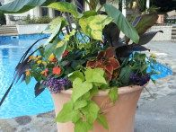 Some container gardens that  I have  designed and grown    I love  container gardening and like to share all  my tips and tricks for beautiful flowers