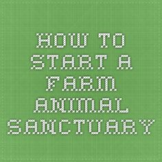 How to start a farm Animal Sanctuary