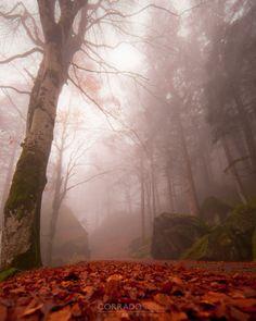 Italian forest by Corrado Orio on 500px