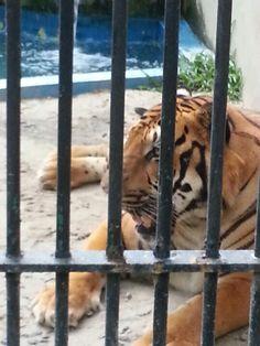 Zoo 17/01/2013