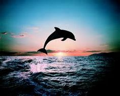 Waking up with the dolphins