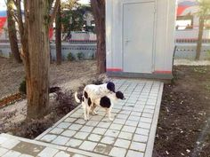 Holland Oats @patrickROFL  Sochi stray dogs win the gold in reproduction @SochiProblems pic.twitter.com/ykeynAEhuz