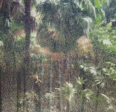 RAIN IN PARADISE #chrisherzog #handyupload