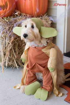 A happy Halloween, you will have. Shop Halloween costumes for the whole family at JCPenney—even dog costumes! Your kids will love trick-or-treating as their favorite Star Wars characters. You'll score cool kids' costumes for less—and they'll score all the goodies. Best Kids Costumes, Creative Costumes, Dog Halloween Costumes, Up Halloween, Pet Costumes, Spirit Halloween, Halloween Table Decorations, Halloween Village, Star Wars Characters