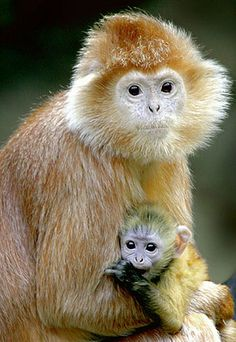 Mother and Baby at Bronx Zoo#baby,animals,zoo,monkey >>>ew514